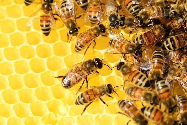 Quel est le symbole de l'abeille?