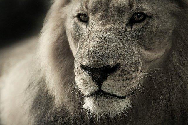 Pourquoi rêver de lion ?