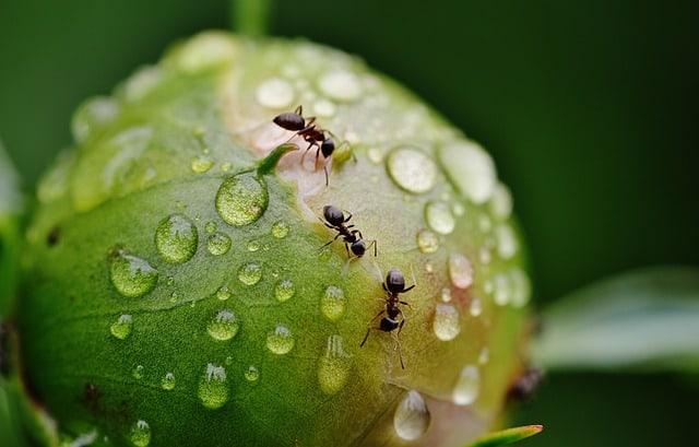 Pourquoi rêver de fourmis ?