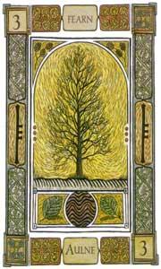 Oracle celte des arbres: la carte l'aulne