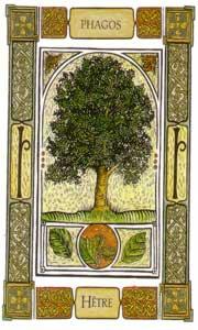 Oracle celte des arbres: la carte le hêtre