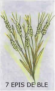 L'oracle chance: la carte les 7 épis de blé