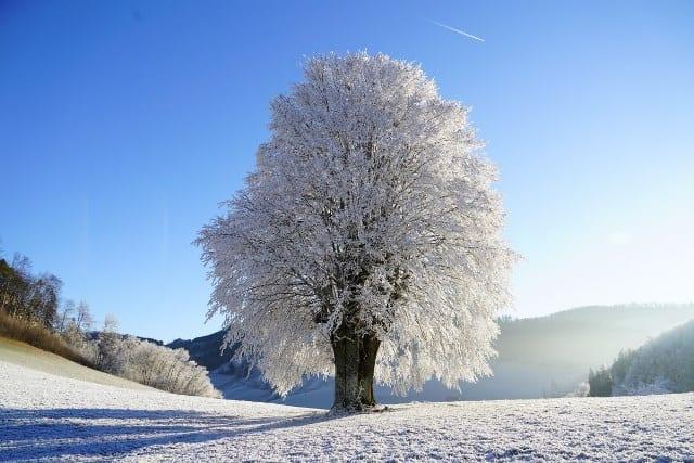 Rêve d'arbre, sa signification et interprétation précise.