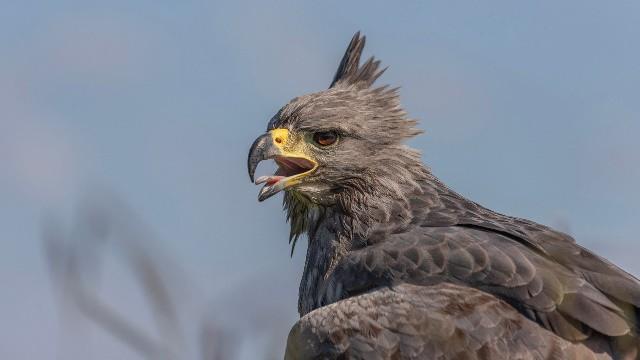 Toutes les superstitions et croyances au sujet de l'aigle