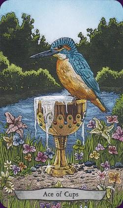 Tarot animal Totem carte ace of cups