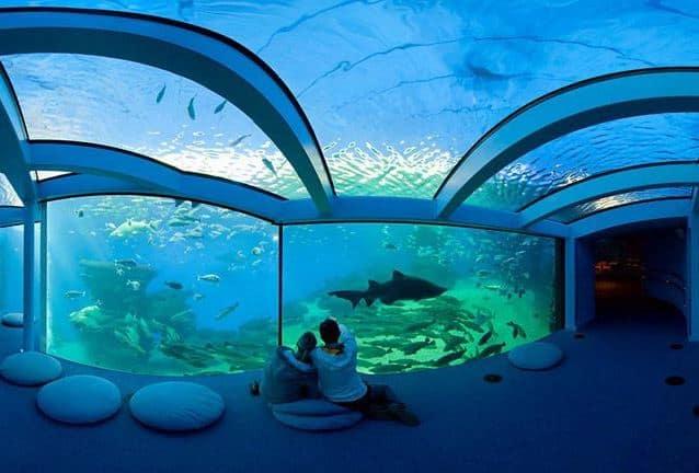 Significations précises du rêve d'aquarium: