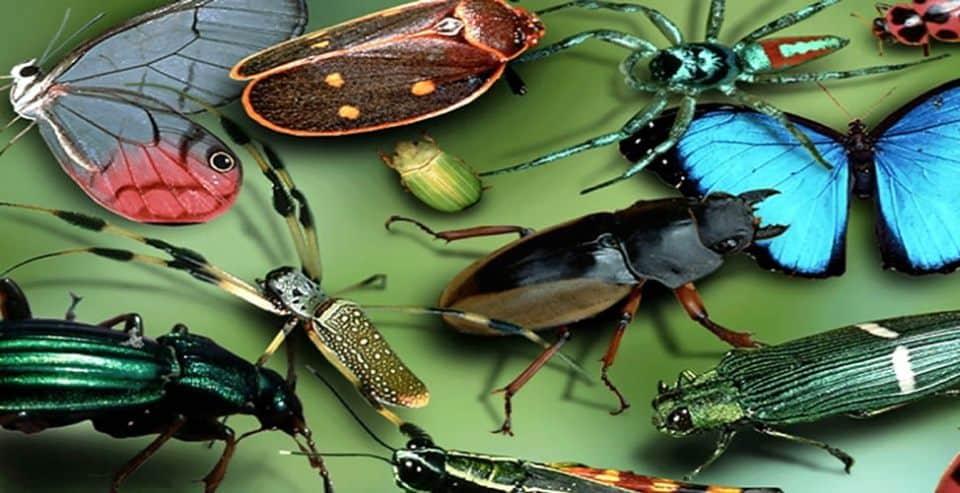Pourquoi rêver d'insectes ?