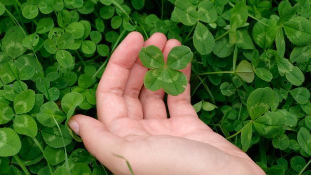 superstitions sur le trèfle à quatre feuilles: