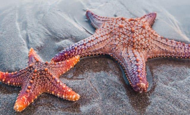 Pourquoi rêver d'étoile de mer ?