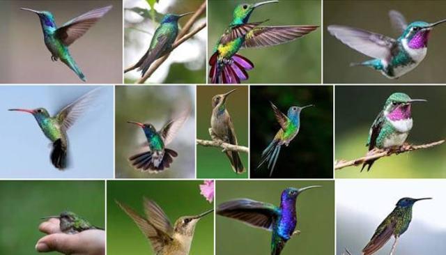 Pourquoi rêver de colibri ?