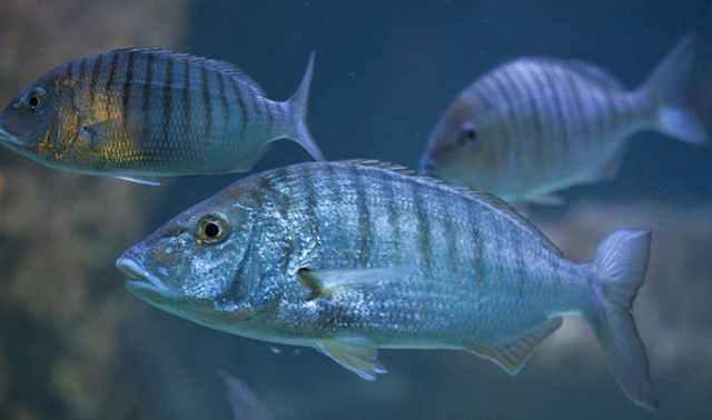 Pourquoi rêver de poissons ?