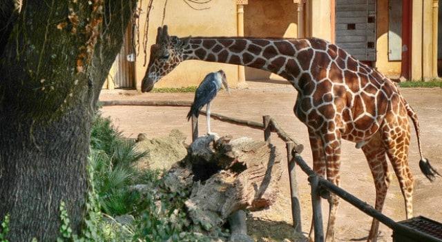Pourquoi rêver de zoo ?