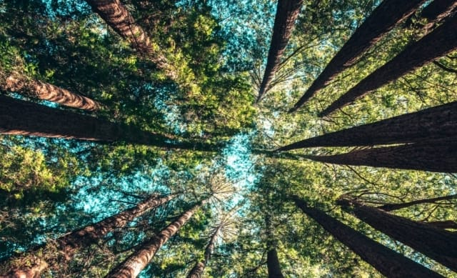 Pourquoi rêver de nature ?