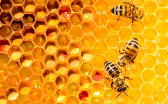 Pourquoi rêver d'abeille ?