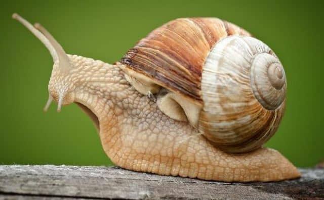 rêver d'escargot