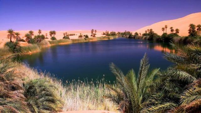 Pourquoi rêver d'oasis ?
