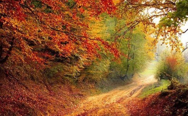 Rêve d'automne ?
