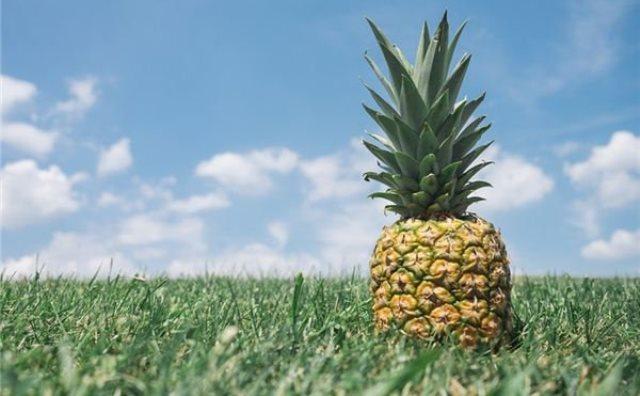 Pourquoi rêver d'ananas ?