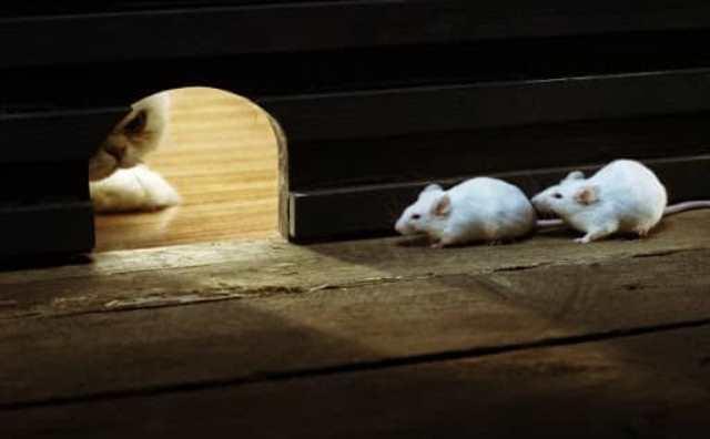 rêver de souris qui s'enfuit