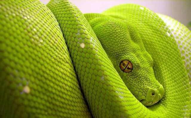 serpent et superstitions