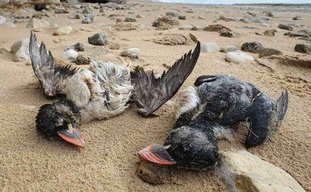 rêver d'oiseaux morts