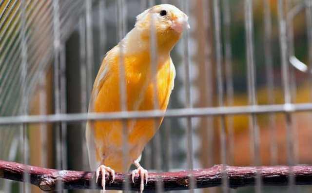 rêver de cage à oiseaux