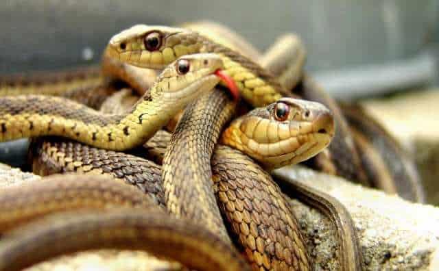 rêver de serpents psychologie