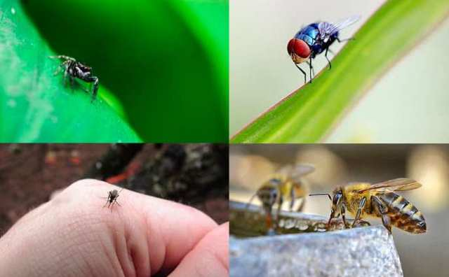 Signification spirituelle des insectes