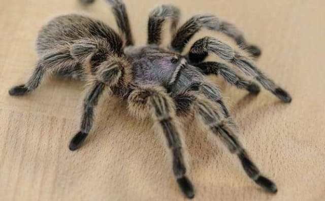 Araignée et superstitions