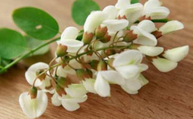 Fleur d'acacia et symbole
