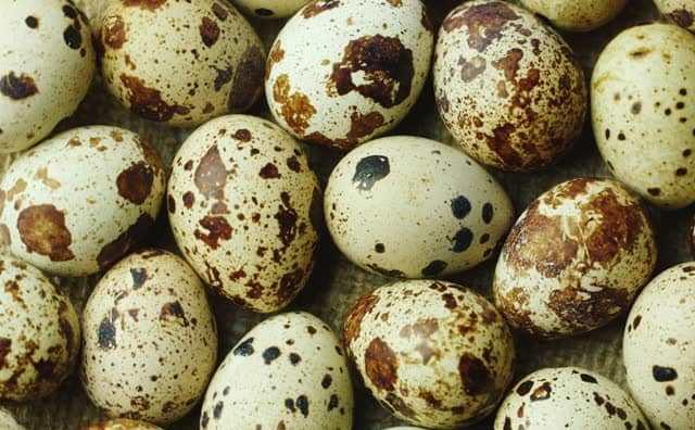 rêver d'œufs de caille