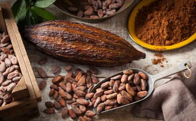 rêver de cacao