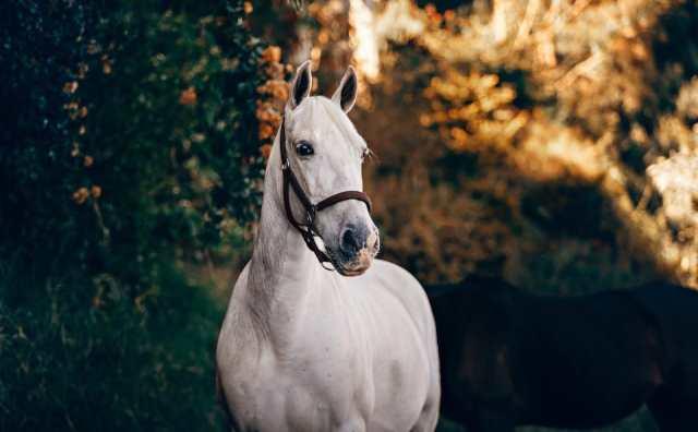 rêver de cheval