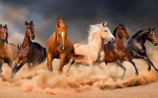 rêver de chevaux agressifs ou sauvages