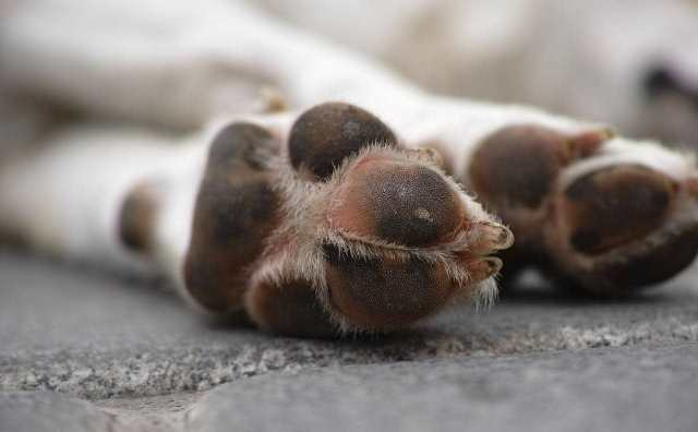 rêver de chien mort