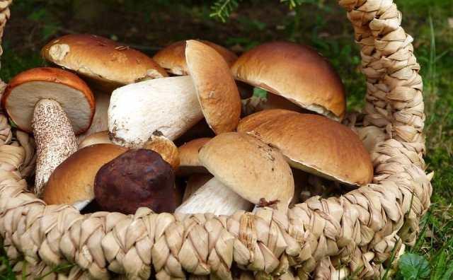 rêver de cueillir des champignons