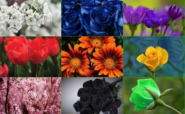 Signification des couleurs des fleurs