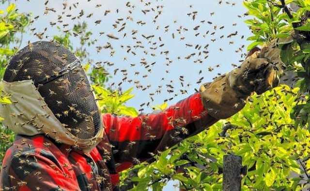 Rêve d'être poursuivi par des abeilles : explications.