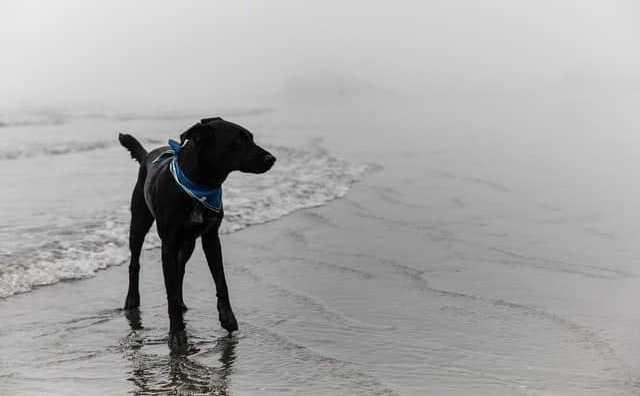 rêver de chien noir