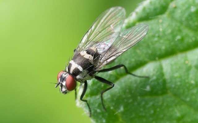 rêver de mouches