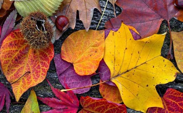 signification spirituelle du mois du mois d'octobre :